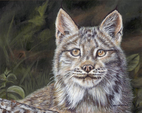 Missing Lynx By Cher Anderson