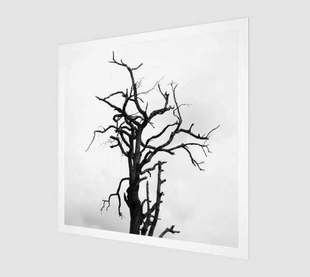 Tree Branches [Museum Quality Fine Art Prints]