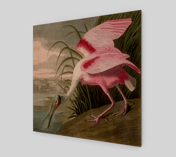 Buy famous artwork Roseate Spoonbill by Audubon John James - A painting of pink bird drinking water from the river