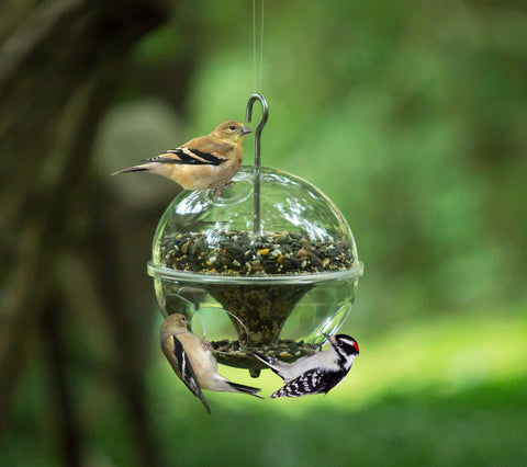 Fine Feathers Clear Acrylic Globe Multi Bird Feeder with Metal Hanging Hook