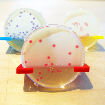 preserved petri dish with bacteria using Amino Labs Keep it kit - preservation kit -biotechnology kits - Learn and practice your genetic engineering, bioart and living art skills while discovering the answers to the most common biology, biotechnology, bioart, life science, biohacking and genetic engineering questions as part of getting started with your personal biotechnology science project.
