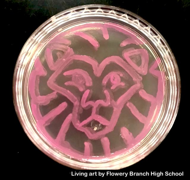 glowing bacteria, agar art, Bacteria art made with colored bacteria using Amino Labs Bioart Canvas kit, Petri dish art kit, microbial art kit for glowing bacteria, bacteria art, bacterial art, living art, STEM science project kit, sciart, great for middle school science, biology, high school, DIY bio, biohacking, home biotechnology