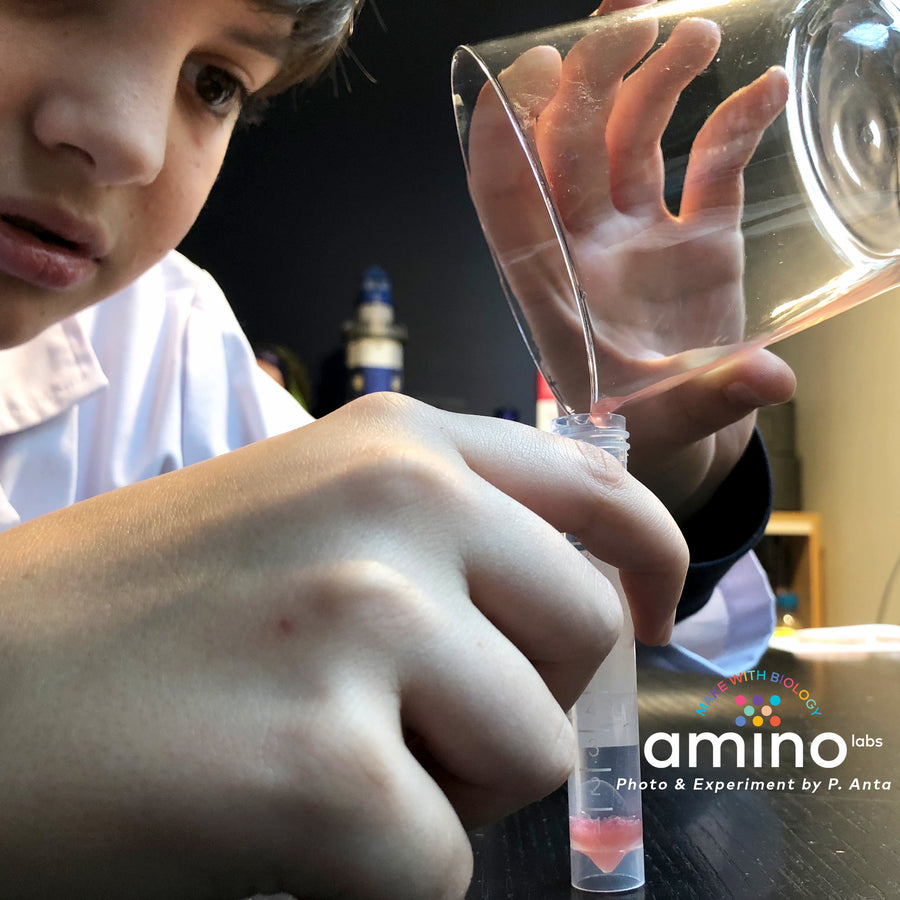teenager home biology experiments, STEM experiments as part of Amino Labs' Zero to Genetic Engineering hero starter pack -  Learn what is DNA, what is a gene, cell theory, genetic engineering, bioart, biotechnology, biohacking and genetic engineering with the world's first biohacking and biotechnology STEM beginner's starter kits