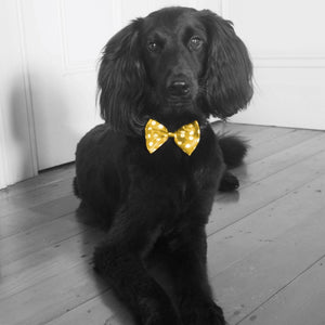 Black dog gold bow tie. Interior styling solution