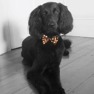 Black dog bronze bow tie. Interior styling solution