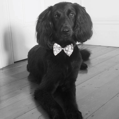 Black dog silver bow tie. Interior styling solution