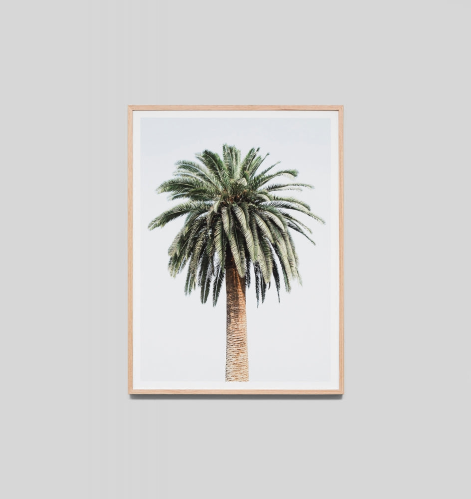 Caribbean Palm Framed Artwork