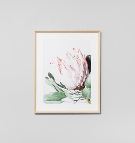 Protea Flower Framed Artwork