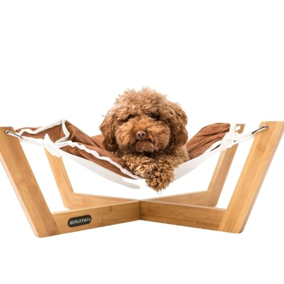 cavoodle bed Henley & co