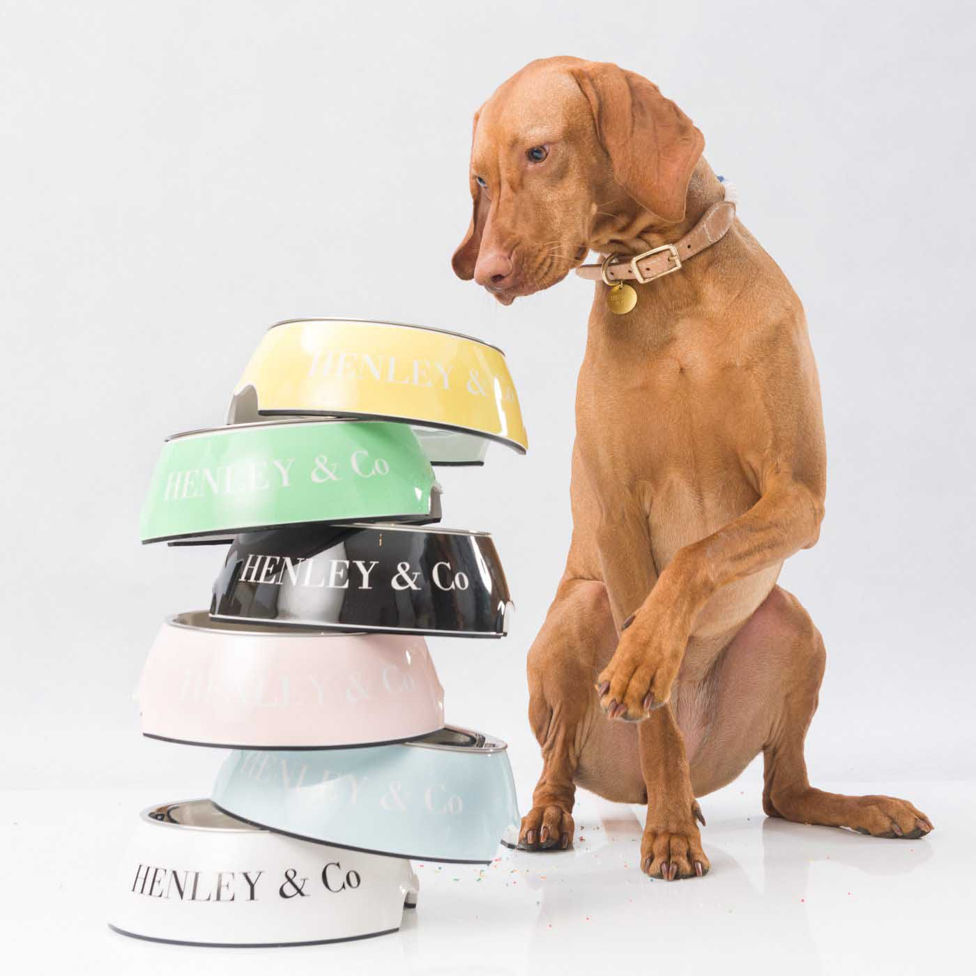 A sitting brown dog looking at a stack of Henley and Co food bowls