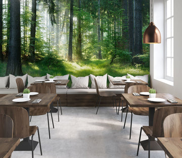3D Forest Sun 24 Wall Murals