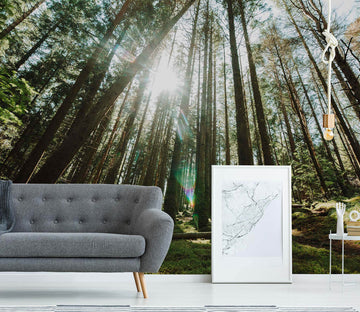 3D Forest Trees 85 Wall Murals