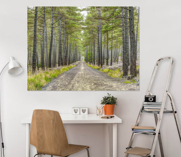 3D Forest Path 042 Assaf Frank Wall Sticker