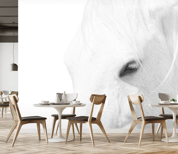 3D White Horse 1452 Marco Carmassi Wall Mural Wall Murals