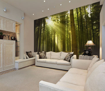 3D sunshine in the forest 30 Wall Murals