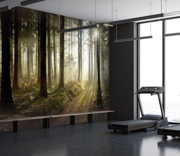 3D sunshine in the forest 17 Wall Murals