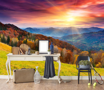 3D Sunset Forest 113 Wall Murals