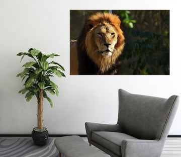 3D Forest Lion 95 Animal Wall Stickers