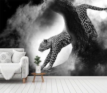 3D Black And White Tiger 208 Wallpaper AJ Wallpaper