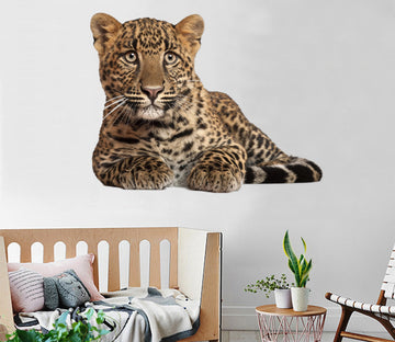 3D Quiet Tiger 167 Animals Wall Stickers