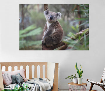 D Koala 88 Animal Wall Stickers