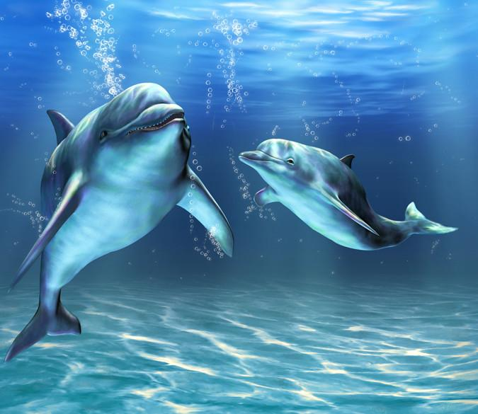 Two Swimming Dolphins Wallpaper AJ Wallpaper