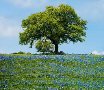 Wildflowers And Trees Wallpaper AJ Wallpaper