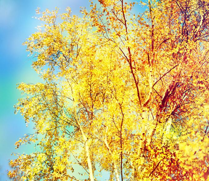 Yellow Branches Wallpaper AJ Wallpaper