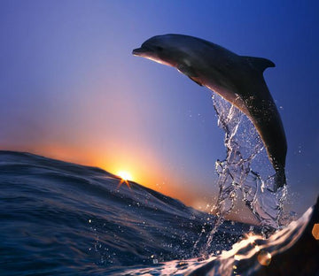 Surfing Dolphin Wallpaper AJ Wallpaper