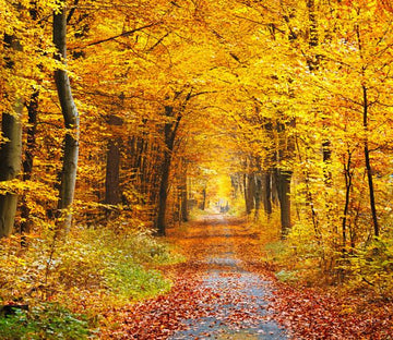 Beautiful Autumn Forest Wallpaper AJ Wallpaper