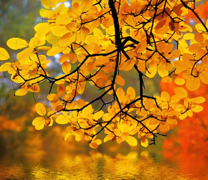 Beautiful Yellow Branches Wallpaper AJ Wallpaper