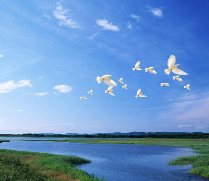 Flying White Doves Wallpaper AJ Wallpaper