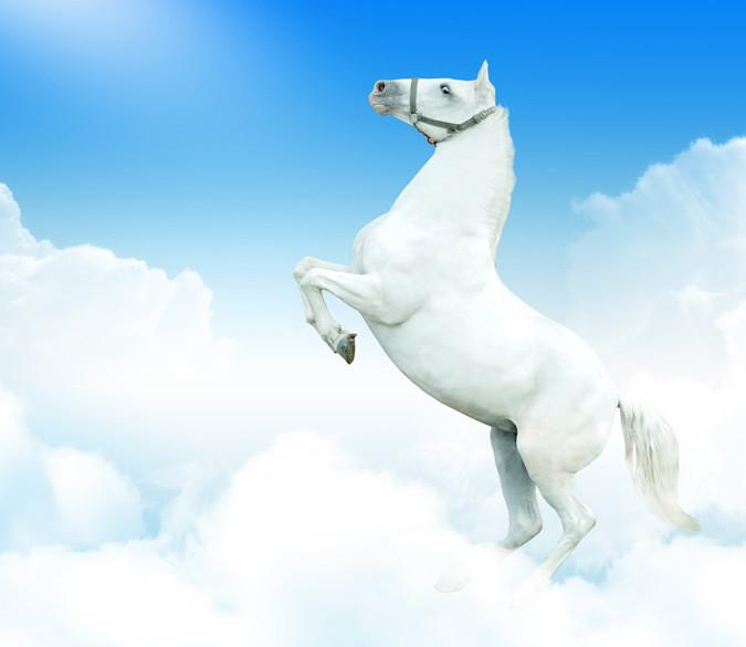 Jumping White Horse Wallpaper AJ Wallpaper