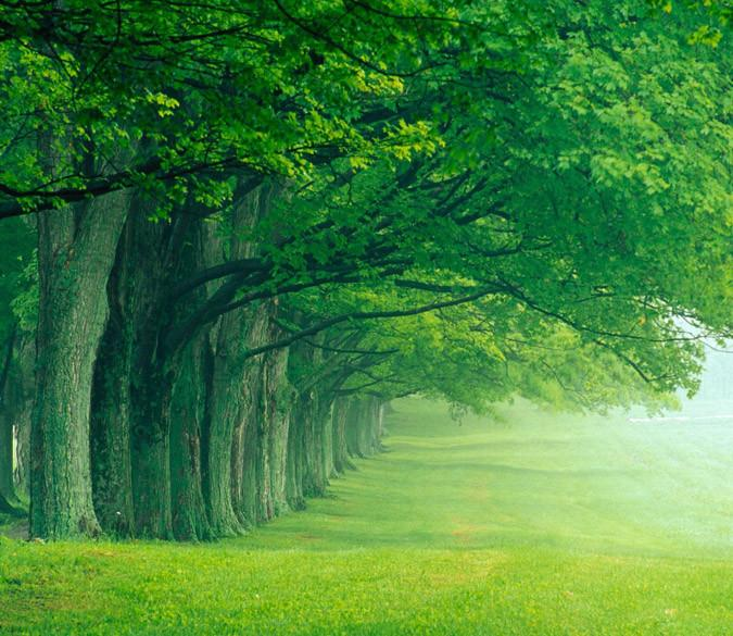 Green Lawn And Trees Wallpaper AJ Wallpaper