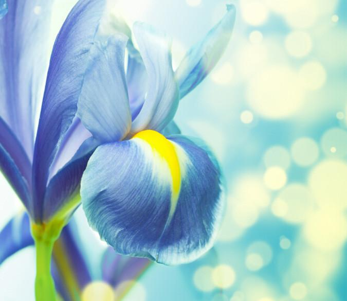 Blue Flowers Wallpaper AJ Wallpaper