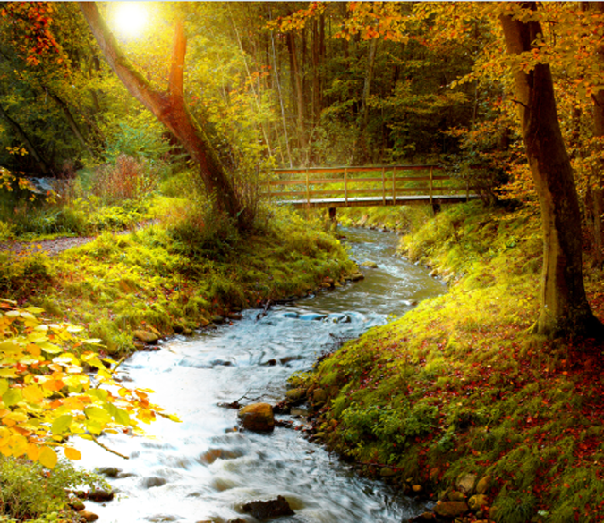 Forest Winding Stream Wallpaper AJ Wallpaper