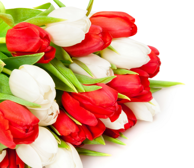 Tulips Wallpaper AJ Wallpaper