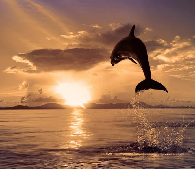 Jumping Dolphin Wallpaper AJ Wallpaper