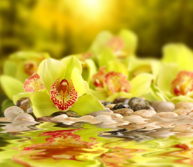 Flowers Pebbles Wallpaper AJ Wallpaper