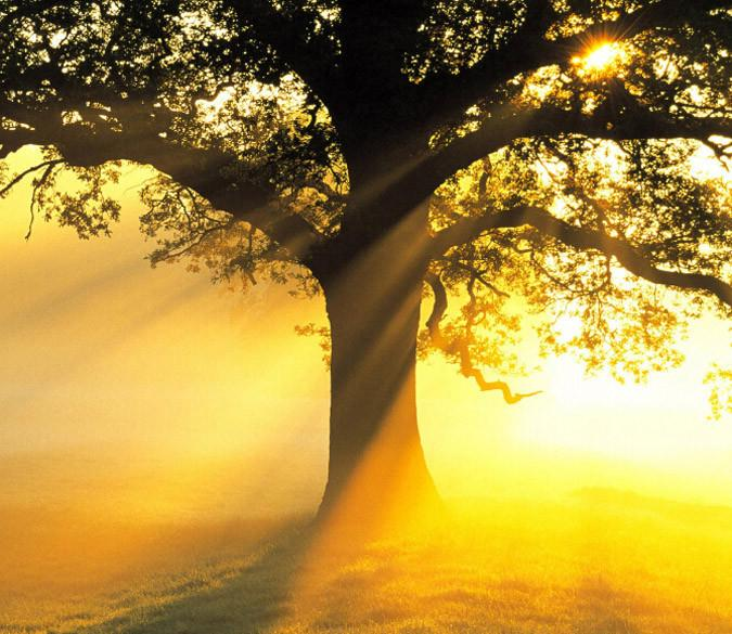 Tree Bright Sunshine Wallpaper AJ Wallpaper