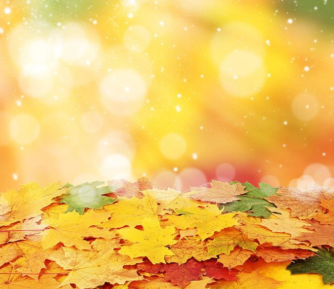 Colorful Leaves Wallpaper AJ Wallpaper