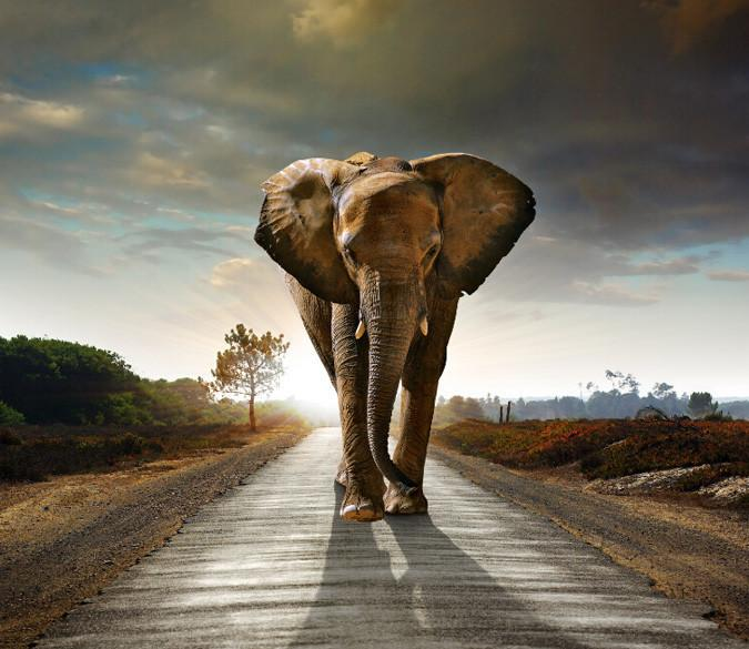 Walking Elephant Wallpaper AJ Wallpaper