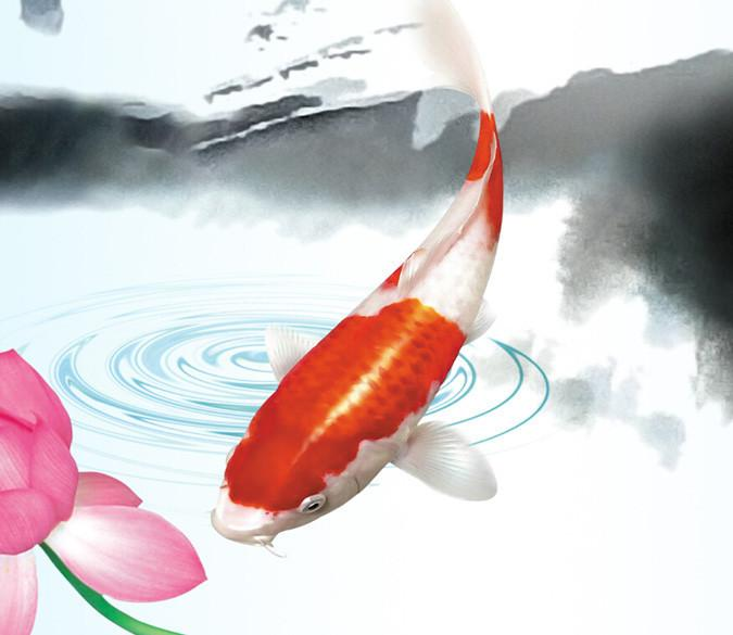 Fish And Lotus Wallpaper AJ Wallpaper