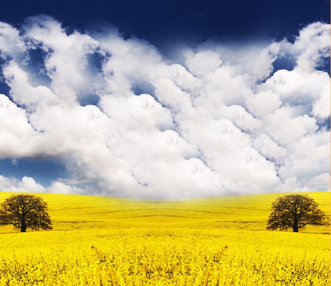 Yellow Flowers Fields Wallpaper AJ Wallpaper