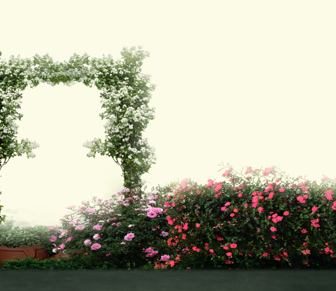 Flowers Arch Door Wallpaper AJ Wallpaper