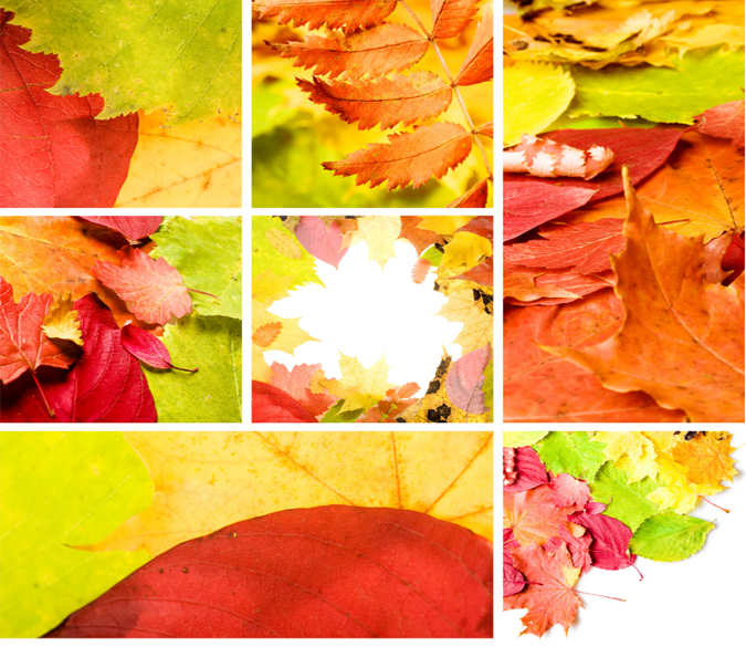 Beautiful Leaves 1 Wallpaper AJ Wallpaper