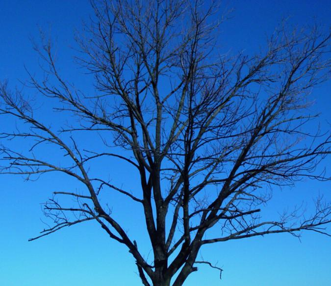 Bare Tree 2 Wallpaper AJ Wallpaper