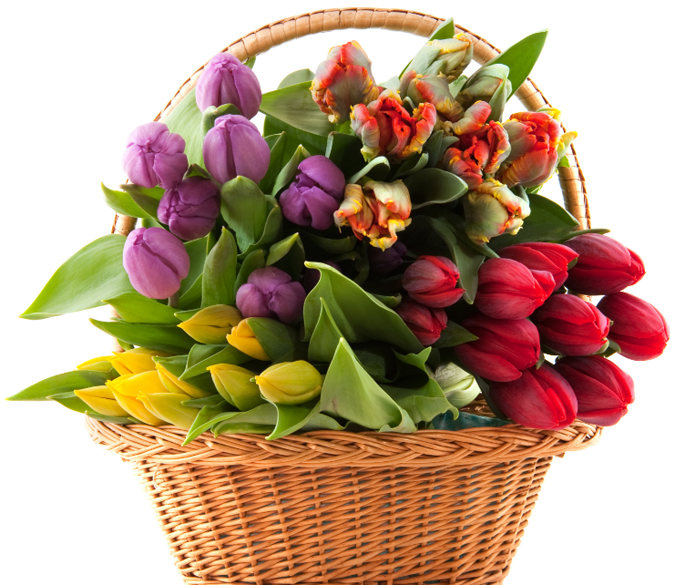 Color Tulips Basket Wallpaper AJ Wallpaper