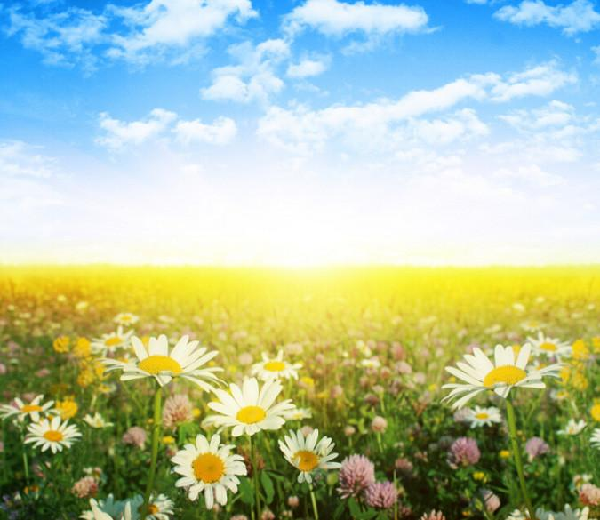 Beautiful Wildflowers 4 Wallpaper AJ Wallpaper