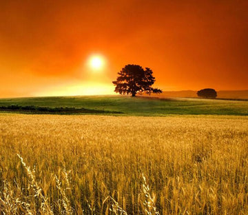 Beautiful Wheat Field Wallpaper AJ Wallpaper